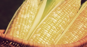 corn_basket